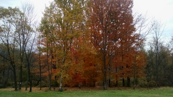 Some great colors still - I snapped at my parent's house this weekend.