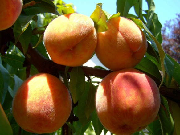peach-863349_1920